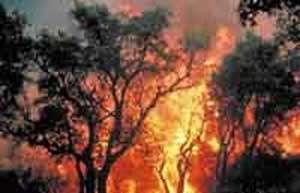Au Portugal, des débris calcinés ont été retrouvés jusqu'à 17 kms de l'incendie. photo : Cemagref - R.Valentin ref : iM5404