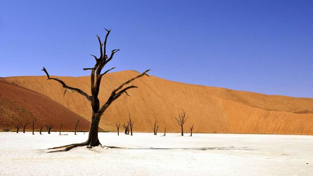 Dead Vlei, un paysage d'un autre monde