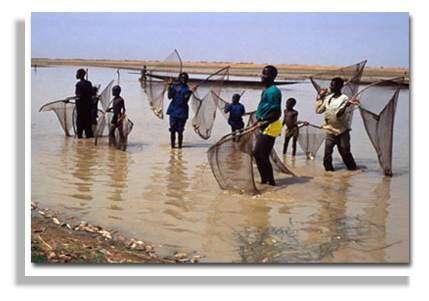 Entre Mopti et le lac Débo, le grand affluent Mayo Dembé : la décrue (avril 1995). Delta Central du Niger. Mali. © IRD/Yveline Poncet.