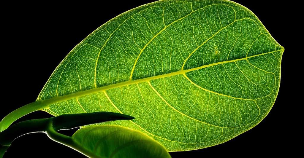 Les technologies propres. © Josch13, DP