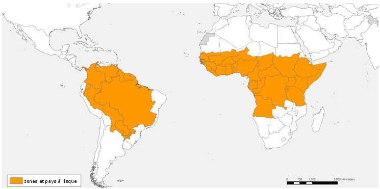 Zones et pays à risque pour la fièvre jaune, en 2008. © OMS, 2008