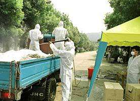 Trois membres d'une même fratrie sont morts de la grippe aviaire à l'est de la Turquie Des analyses sont en cours pour déterminer s'il s'agit du sous-type H5N1 (Crédits : China Internet Information Center)