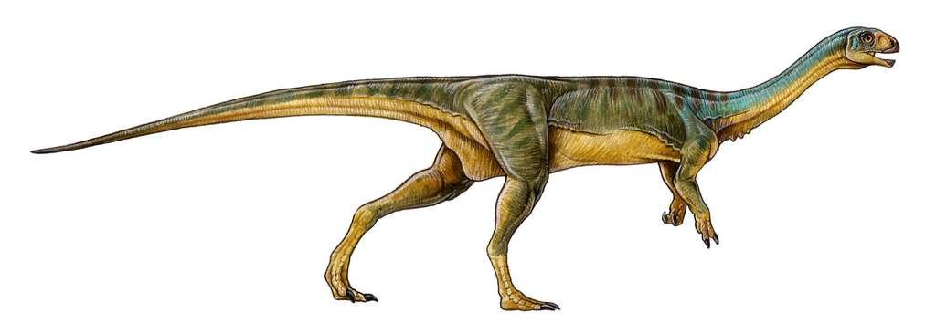 Chilesaurus diegosuarezi pouvait probablement atteindre trois mètres de long. Ce dinosaure herbivore était apparenté aux théropodes, un important groupe de dinosaures bipèdes carnivores dont l'exemple le plus connu est le T-Rex. Ses premiers restes fossilisés ont été trouvés au Chili en 2004 mais il a fallu la découverte d'autres squelettes pour comprendre qu'il s'agissait d'une seule espèce. © University of Birmingham