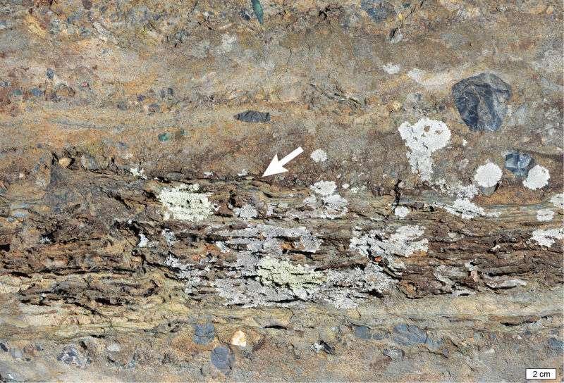 Une fine couche formée de tapis microbiens fossilisés empilés (flèche) incorporée dans des roches sédimentaires et des grès dans la ceinture de roches vertes de Barberton, en Afrique du Sud. En bas à droite, une barre donne l'échelle. © Martin Homann, European Institute for Marine Studies
