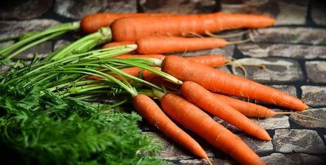 La récolte de carottes. © Congerdesign, Pixabay, DP