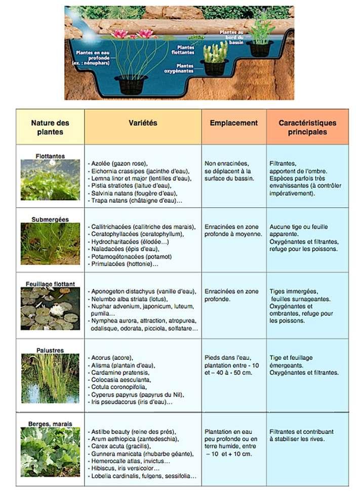 Bien choisir les plantes et leur emplacement dans le bassin permet d'obtenir une eau claire. © lagunaponds.com