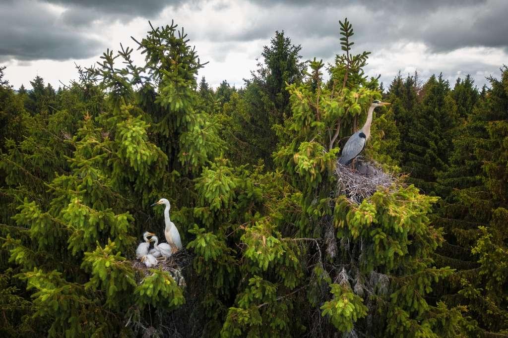 La forêt des hérons, Russie. © Dmitrii Viliunov, Drone Photo Awards