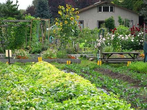 Le jardin du futur se mettra au vert... et au numérique. © T*C*W* / Flickr - Licence Creative Common (by-nc-sa 2.0)
