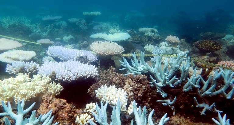 Le plus grand récif corallien du monde qui s'étire sur 2.300 km, se meurt. © Mia Hoogenboom, ARC Centre of Excellence for Coral Reef Studies, AFP, Archives