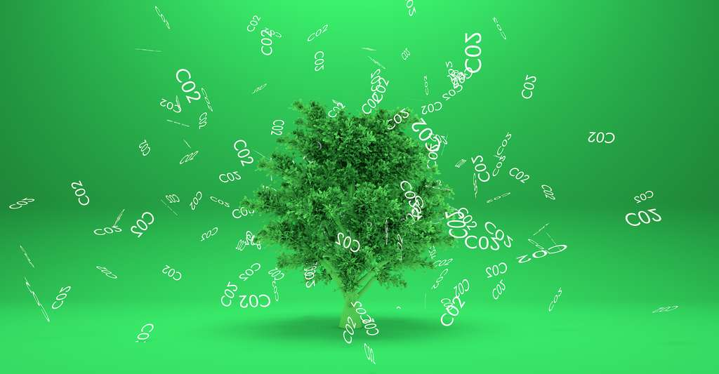 Selon les estimations, il restait, en 2013, à peu près 5,5 millions de kilomètres carrés de forêts tropicales vierges. En Amazonie, au Congo et en Nouvelle-Guinée. C'est environ 20 % de l'ensemble des forêts tropicales, mais environ 40 % de la totalité du carbone stocké dans ces forêts. © Design Cells, Adobe Stock