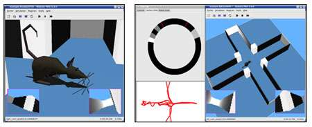 Le robot-rat Psikharpax (ici, dans sa version virtuelle) et le processus d'apprentissage. © Mehdi Khamassi, Benoît Girard, AnimatLab, LIP6 & ISIR