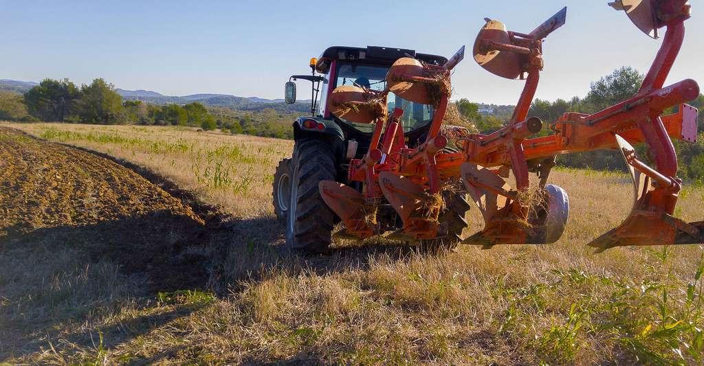 Labourage des champs au printemps. © Jackmac34 - Domaine public