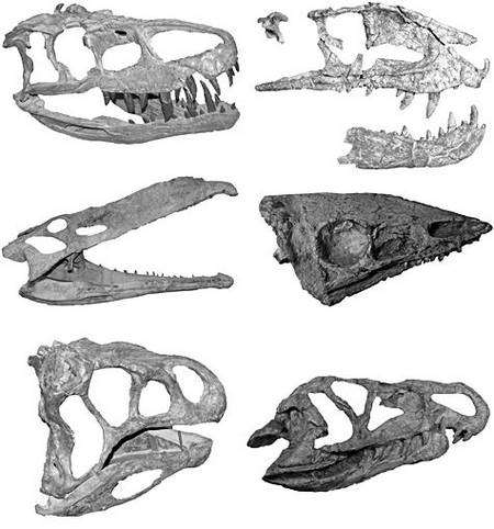 Montage photographique de crânes d'archosaures de type crocodilien, les principaux concurrents des dinosaures au cour du Trias tardif (200-230 millions d'années). Crédit : Université de Bristol
