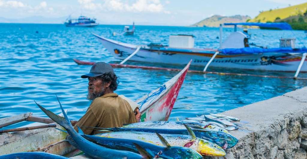 Derrière les coraux, il y a des enjeux humains et économiques. © Guillaume Holzer, Coral Guardian, tous droits réservés