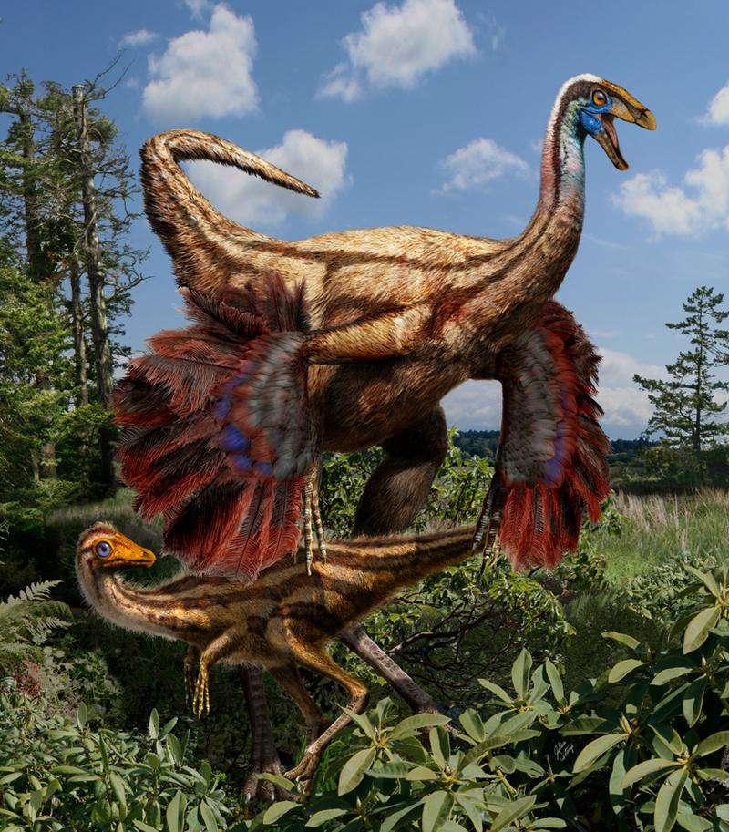 Reconstruction artistique des ornithomimosaures, des Ornithomimus edmontonicus, trouvés en Alberta (Canada). La différence entre le plumage du juvénile et celui de l'adulte, qui semble posséder des ailes primitives, est clairement visible. Les couleurs sont issues de l'imagination de l'artiste. © Julius Csotonyi