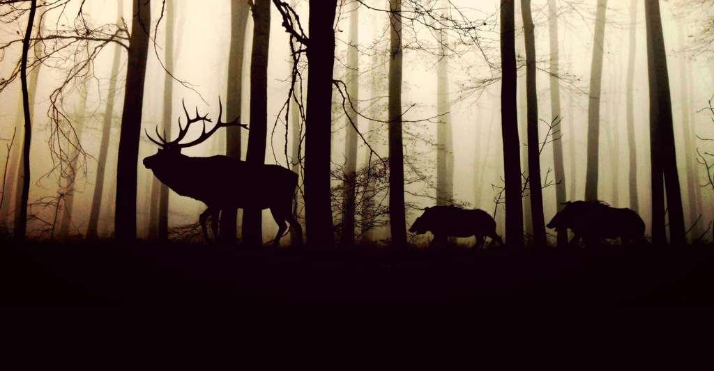 Découvrir la formation des forêts. © Cocoparisienne, CCO
