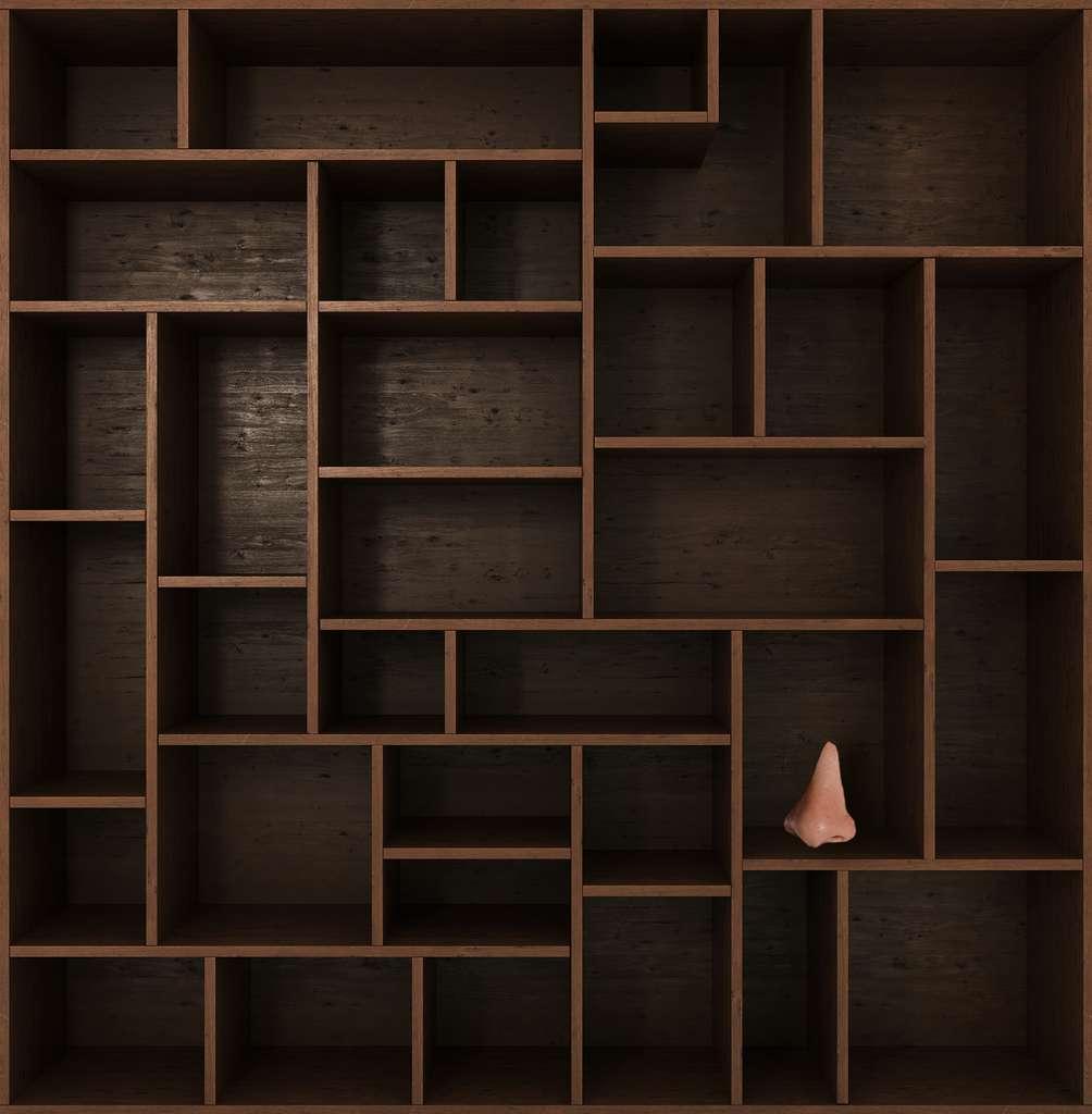 Rendez-vous bientôt pour une nouvelle excursion dans le Cabinet de curiosités ! © Adobe Stock, nosorogua, Futura