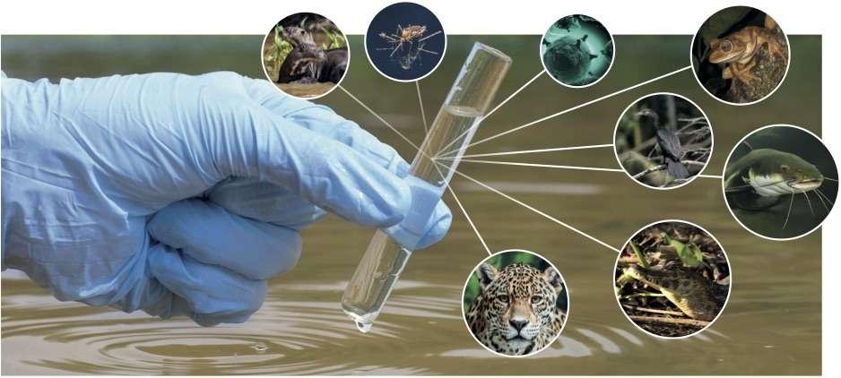 L'ADN environnemental, un outil très puissant pour évaluer la biodiversité. © Vigilife
