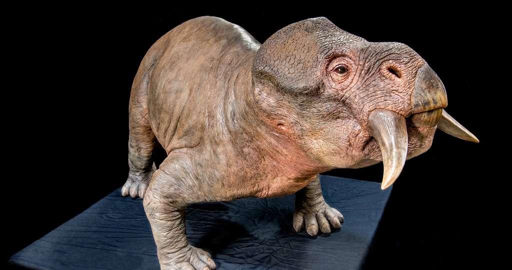 Les animaux à sang chaud sont apparus il y a 250 millions d'années. Ici, représentation de Lystrosaurus murray. © Rtrifunovski via Dinopedia