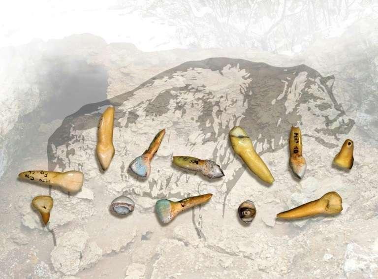 Photo non-datée fournie en janvier 2018 par le CNRS de dents trouvées en fouillant le site des Pradelles, à Marillac-le-Franc, en Charente. © Handout - UMR 5199 PACEA CNRS/AFP