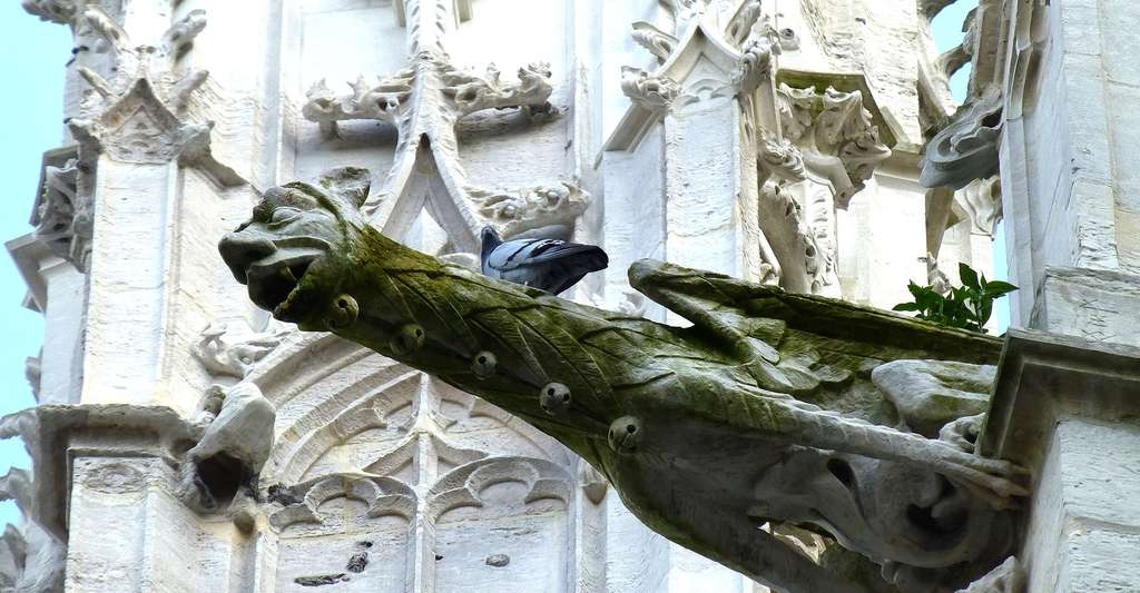 Gargouille de l'église St Maclou à Rouen. © Cyradis, Flickr, CC by-nc 2.0