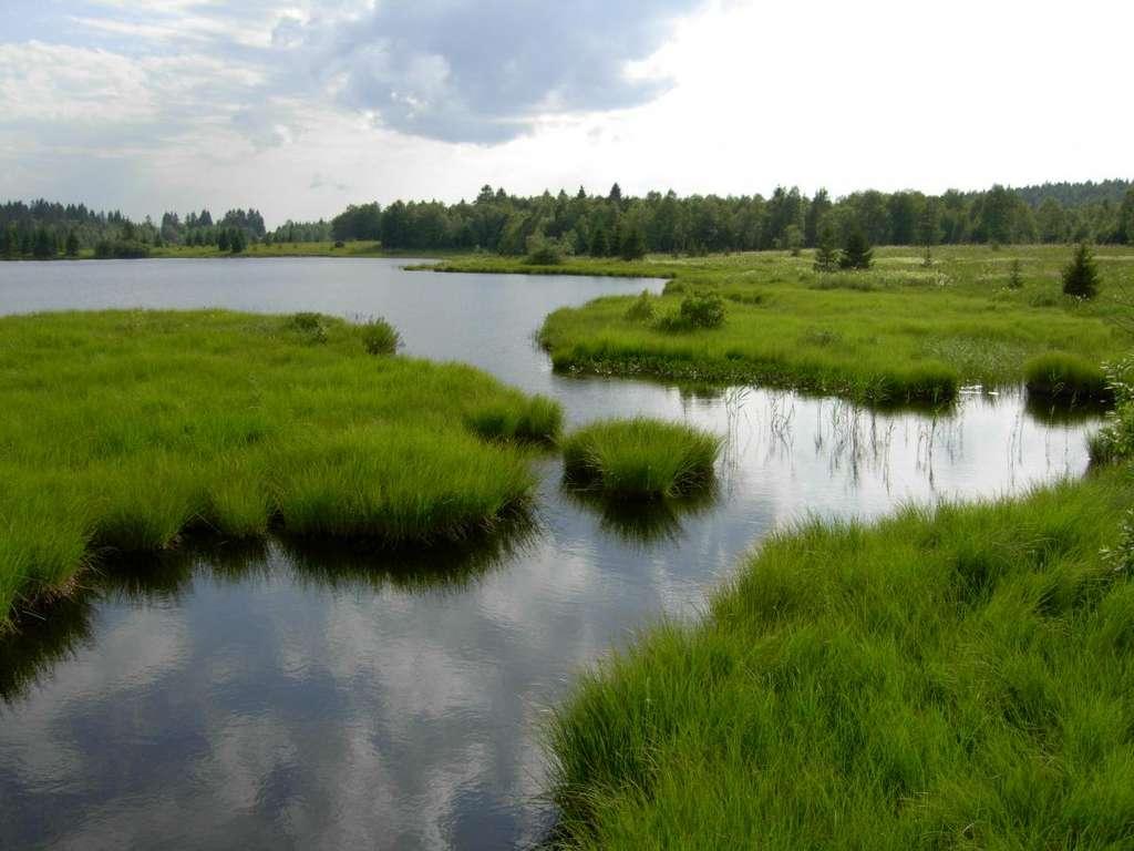 Les tourbières font partie des zones humides et ont longtemps souffert d'une mauvaise image. Elles sont aujourd'hui reconnues en tant qu'écosystèmes fragiles et riches en diversité biologique qu'il faut protéger. © zones-humides.org
