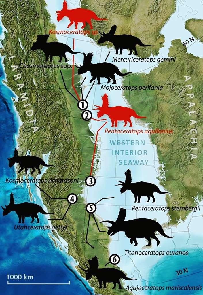 Il y a environ 90 millions d'années, ce qui allait devenir l'Amérique du Nord était constitué de deux îles-continents, Appalachia à l'est et Laramidia à l'ouest. Entre les deux, de l'océan Arctique au golfe du Mexique, s'étendait la Voie maritime intérieure de l'ouest (Western Interior Seaway), également nommée Voie maritime du Crétacé, mer de Niobraran ou mer intérieure nord-américaine. Ces terres étaient richement peuplées par les dinosaures, notamment les grands herbivores de la famille des cératopsidés, à laquelle appartient le Tricératops. © University of Bath