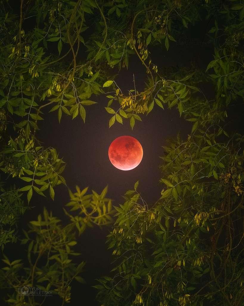 Très belle photo de l'éclipse de Lune prise par un as de l'astrophotographie qui a pris ses quartiers au Chili, jamais très loin des grands observatoires de l'ESO. © Yuri Beletsky