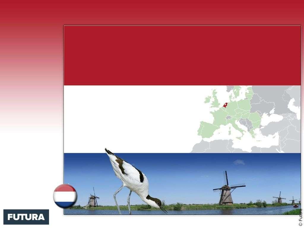 Drapeau : Pays-Bas