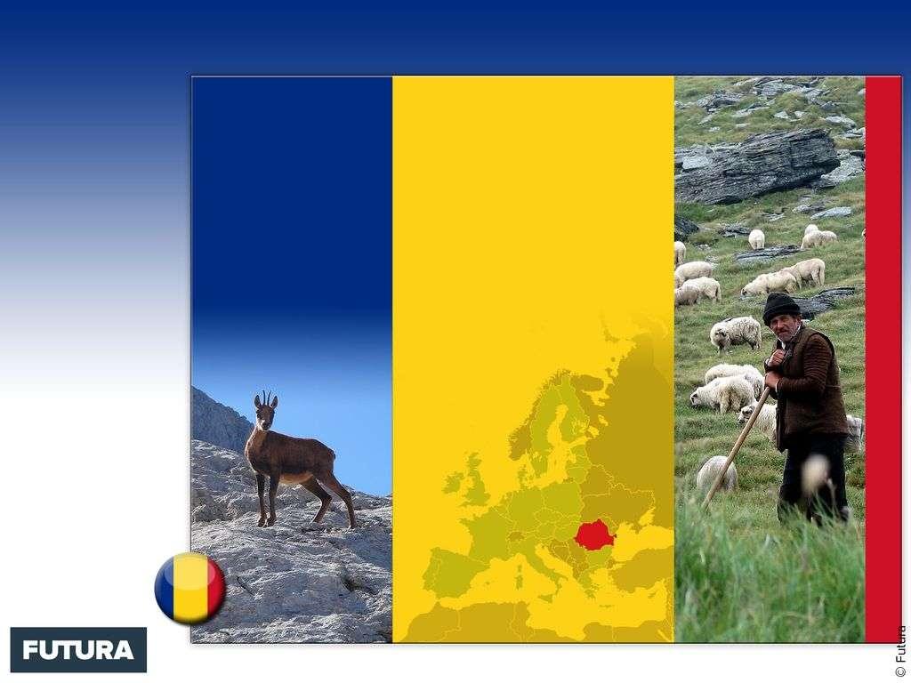 Drapeau : Roumanie