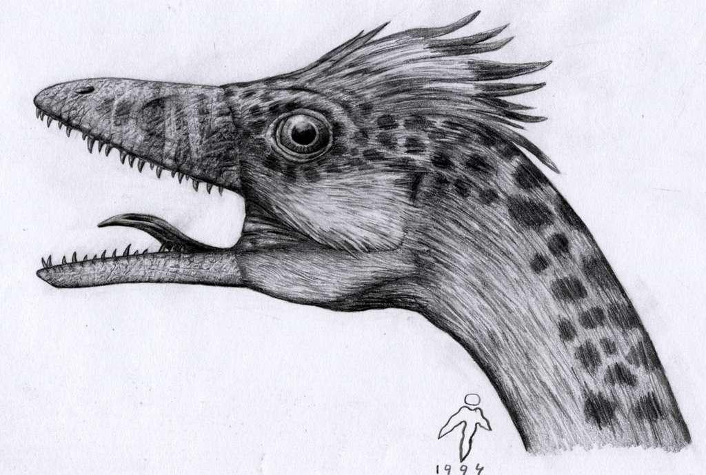 Compsognathus - tête