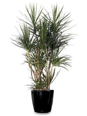 Quelle plante cultiver en appartement ? © DR