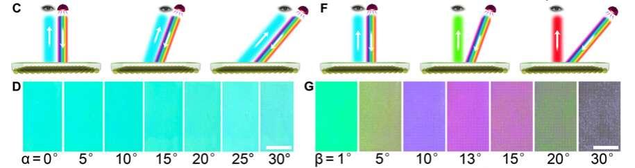 La coloration du film change selon l'angle d'observation du conducteur. © Wen Fan et al., Science Advances, 2019