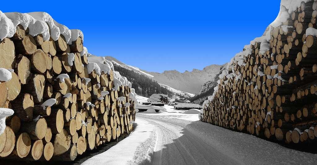 Stères de bois. © Moritz320, Pixabay, DP