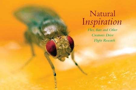 Pourquoi ne pas s'inspirer des mouches, expertes en pilotage depuis 250 millions d'années ? © AVL