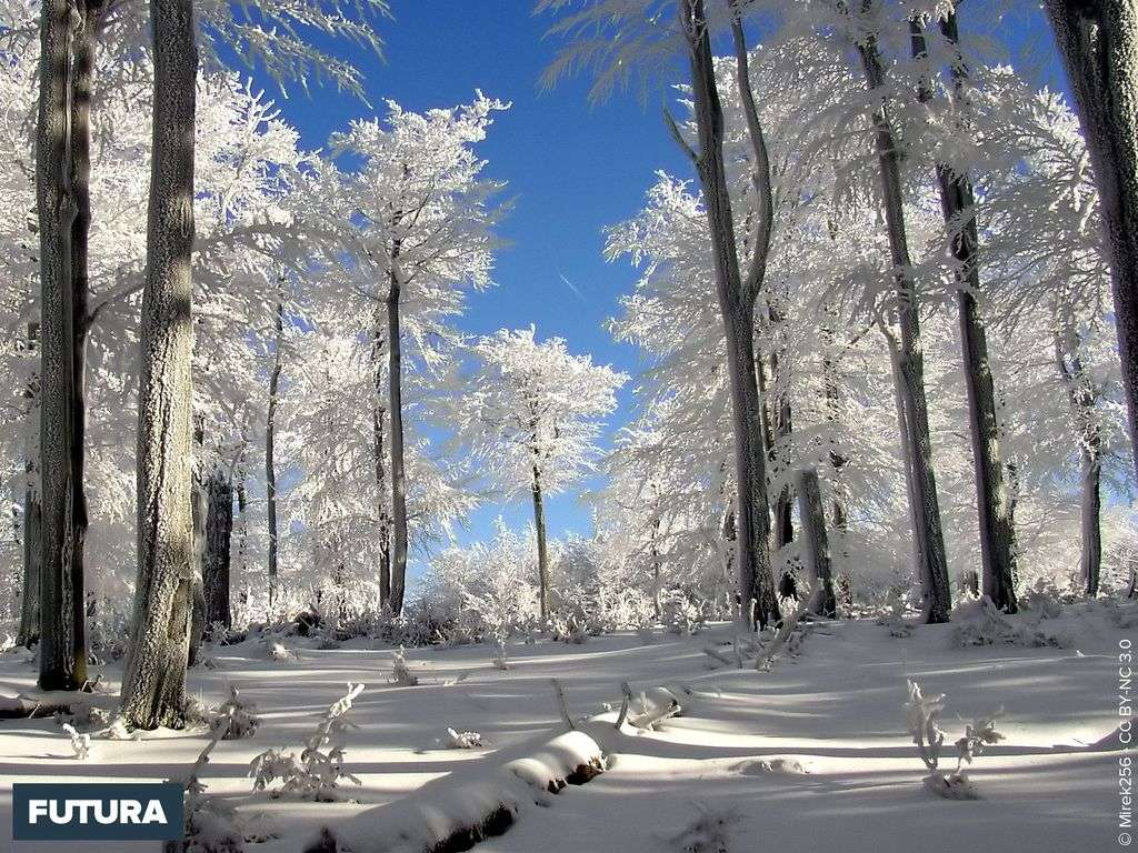 Forêt en hiver