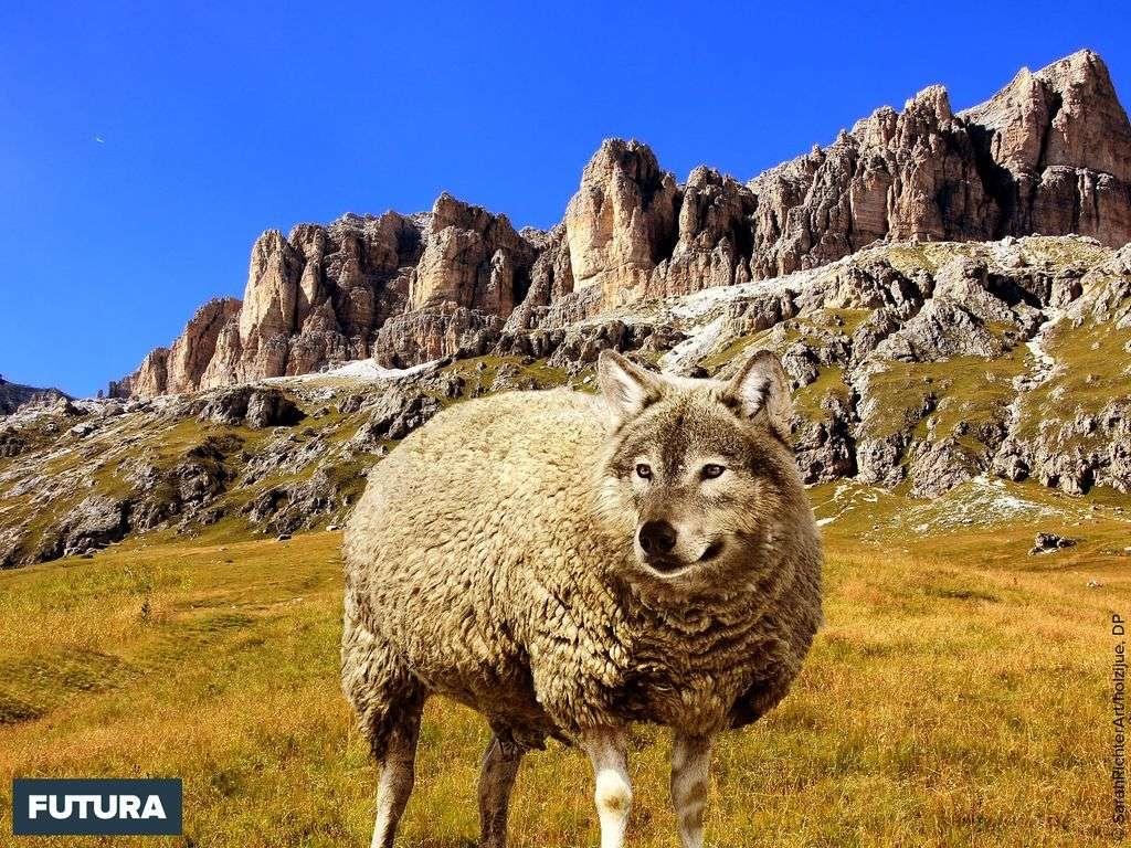 1er Avril : Le loup et l'agneau, fable de La Fontaine