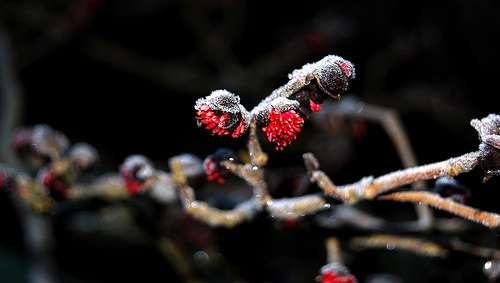 Tout savoir sur les bourgeons. © NO2, Flickr CC by nd 2.0
