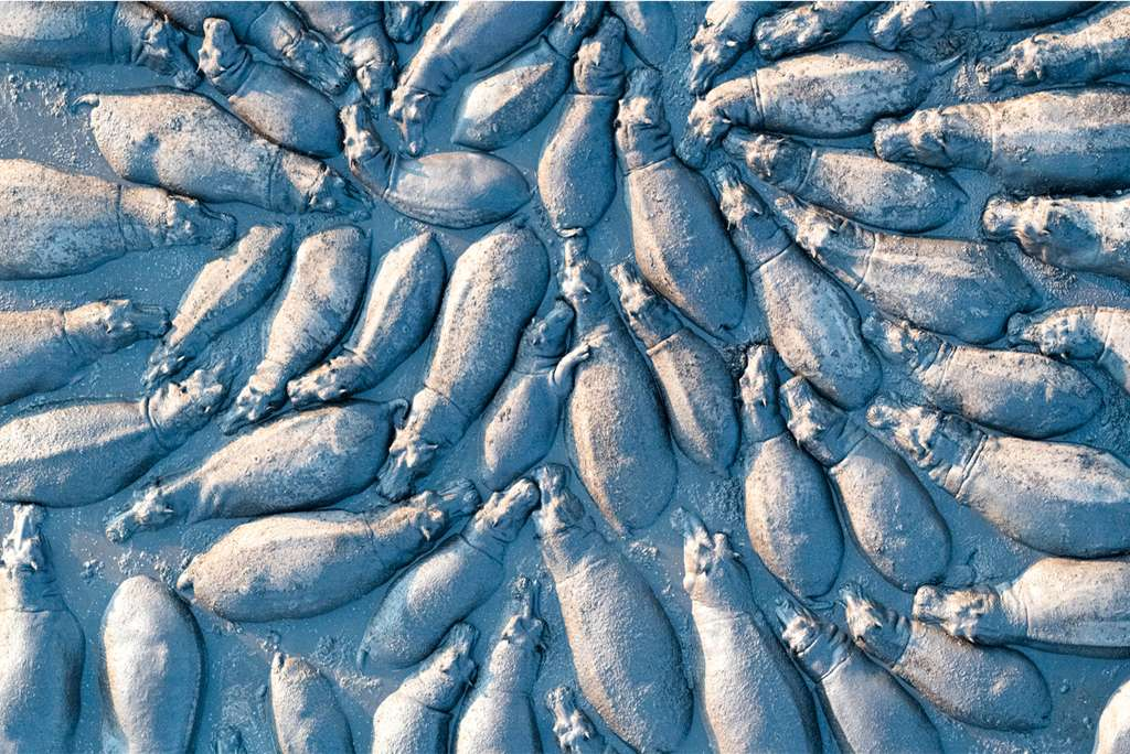 Hippopotamus group from Above. © Talib Almarri, BigPicture Natural World Photography Competition