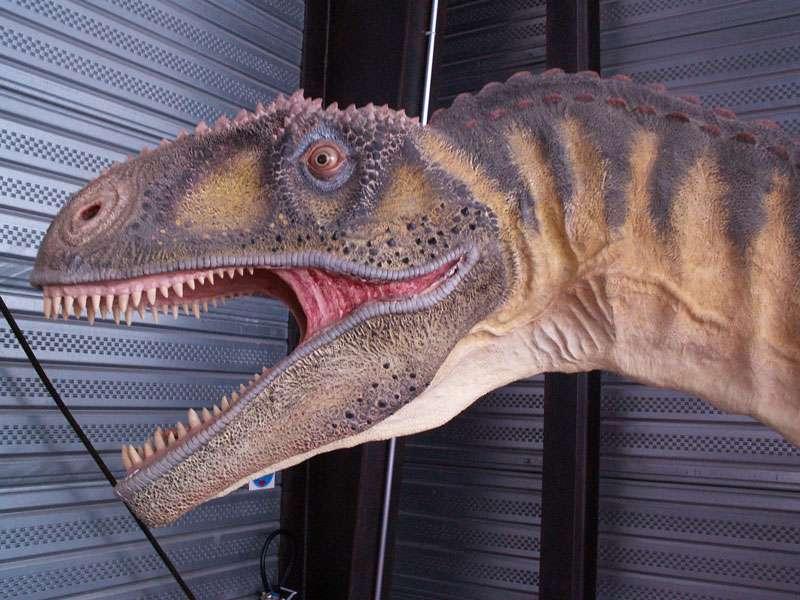 Tarascosaurus, un théropode du sud de la France