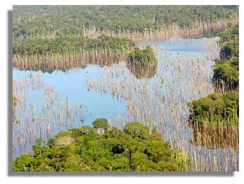 La retenue de Petit-Saut a recouvert près de 350 km² de forêt primaire. Huit ans après sa mise en eau, elle est encore encombrée d'arbres morts. © IRD/Bernard de Mérona.