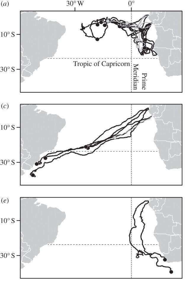 Trois grands groupes de migrations différentes des tortues Luth ont été observées (de haut en bas) : vers l'Atlantique équatorial, l'Amérique du Sud ou l'Afrique du Sud. © Proceedings of the Royal Society B.