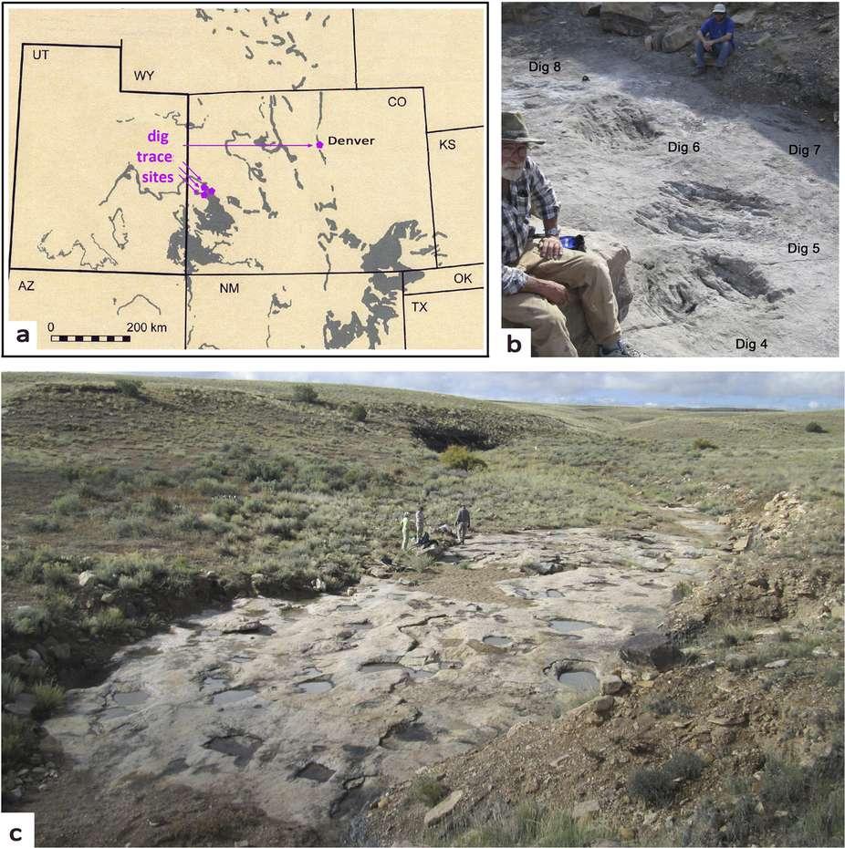 Au Crétacé, cette esplanade (photographie c) était un terrain sableux ou un peu boueux. Des grands théropodes bipèdes l'ont choisie comme piste de danse, et des couples ont dû se former là... L'endroit se trouve dans le Colorado, près de Denver, aux États-Unis (voir la carte en a). De nombreuses traces (dig sur les images) ont été retrouvées en plusieurs endroits. Elles sont de grandes tailles et pour certaines marquées de griffures (photographie b, avec deux des coauteurs de l'étude). © Martin Lockey et al., Nature