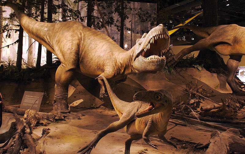 Reproduction d'Albertosaurus models, Royal Tyrell Museum. © D'Arcy Norman Calgary Canada, CC by 2.0