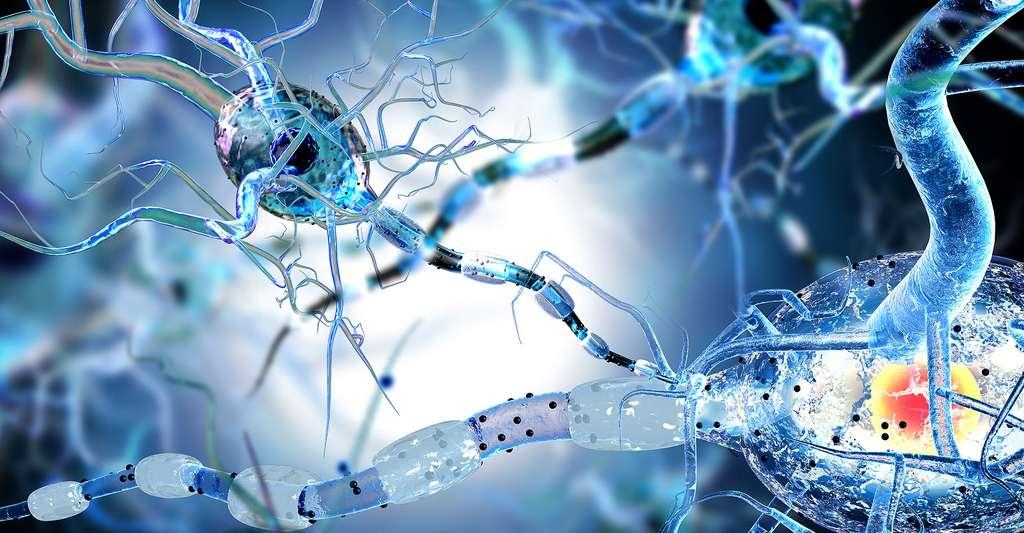 Les gènes sont liés à l'apparition de la sclérose en plaques. © Ralwel, Shutterstock