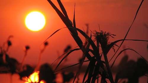 La présence de soleil (sans considération de température) développe des comportements plus altruistes. © Ozfurmulazimoglu, Flickr, CC by-nc-sa 2.0