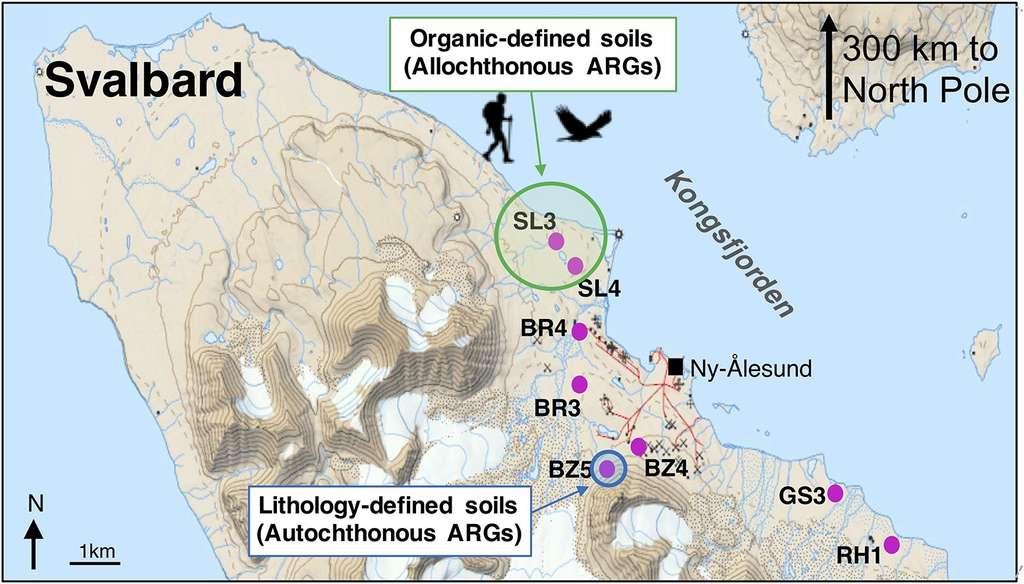 Localisation des prélèvements réalisés dans le Svalbard. ARG : gène de résistance aux antibiotiques.© McCann et al, Environment International 2019