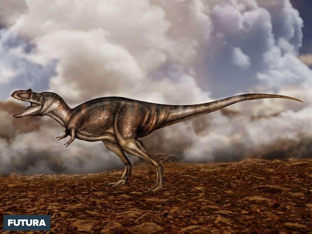 Dinosaure : l'Albertosaurus sarcophagus a vécu au Crétacé il y a 70 millions d'années