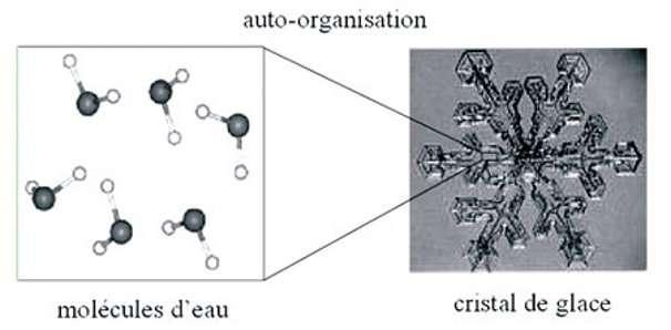 Le phénomène d'auto-organisation : les propriétés globales du cristal de glace sont qualitativement différentes des propriétés locales des molécules d'eau. © DR