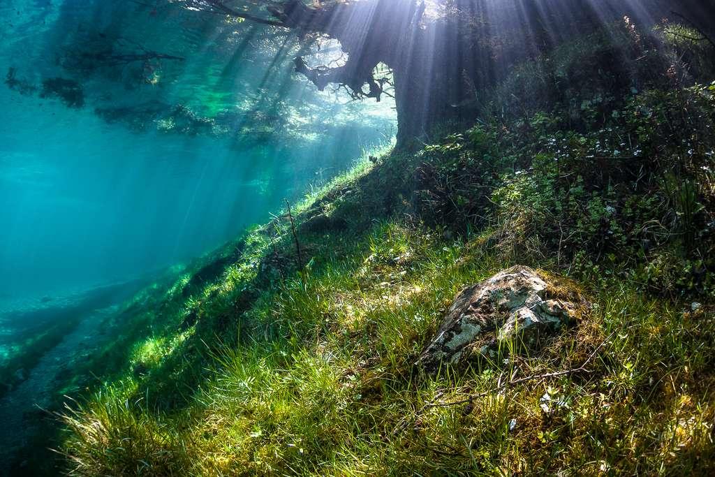 Un arbre englouti par le lac Vert